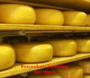 Echte Boeren kaas het rijpen en bestel je online bij www.Noordhollandseboerenkaas.nl